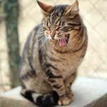 Macska csapda